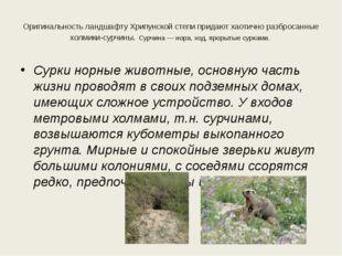 Оригинальность ландшафту Хрипунской степи придают хаотично разбросанные холми