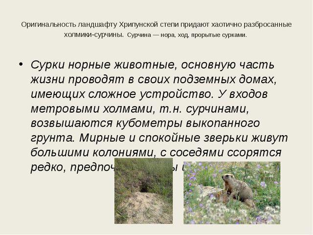 Оригинальность ландшафту Хрипунской степи придают хаотично разбросанные холми...