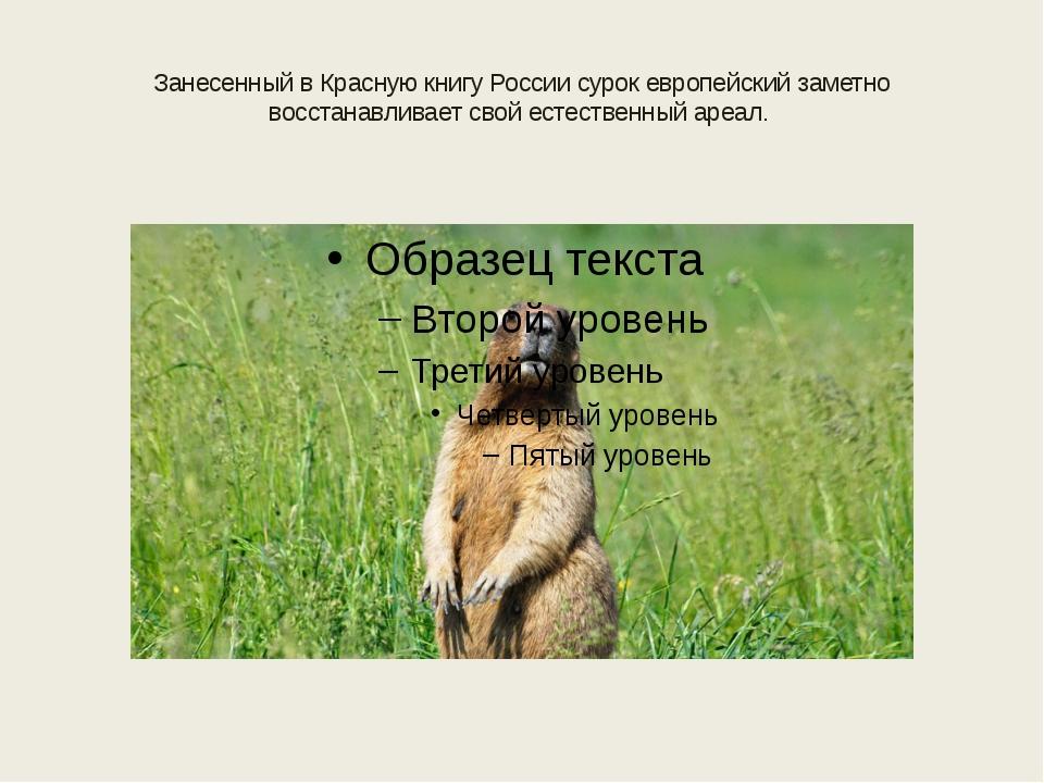 Занесенный в Красную книгу России сурок европейский заметно восстанавливает с...
