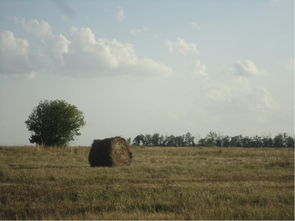Несмотря на ежегодное сенокошение, Хрипунская степь не утратила черт, свойств...