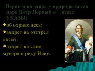 Первым на защиту природы встал царь Пётр Первый и издал УКАЗЫ: об охране лес