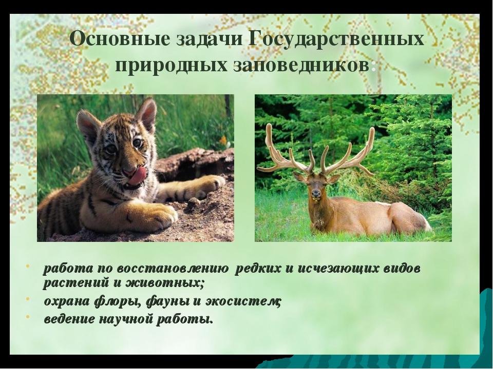 Основные задачи Государственных природных заповедников: работа по восстановле...