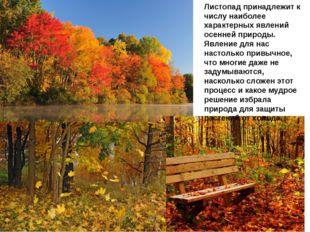 Листопад принадлежит к числу наиболее характерных явлений осенней природы. Я