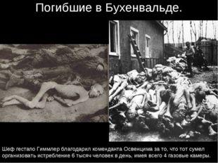 Погибшие в Бухенвальде. Шеф гестапо Гиммлер благодарил коменданта Освенцима з