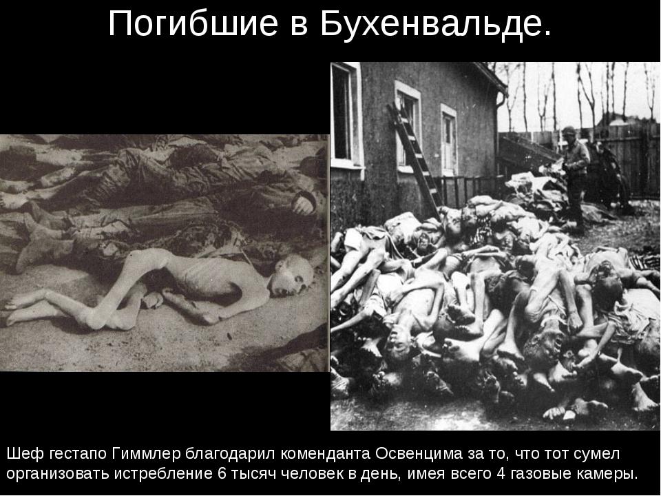 Погибшие в Бухенвальде. Шеф гестапо Гиммлер благодарил коменданта Освенцима з...