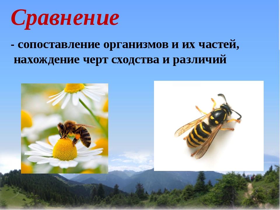 Сравнение - сопоставление организмов и их частей, нахождение черт сходства и...