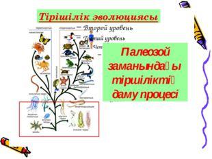 Палеозой заманындағы тіршіліктің даму процесі Тірішілік эволюциясы