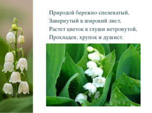 Природой бережно спеленатый, Завернутый в широкий лист, Растет цветок в глуш