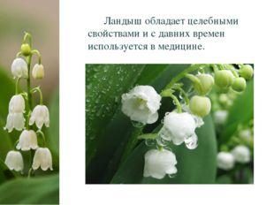 Ландыш обладает целебными свойствами и с давних времен используется в медици