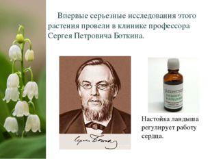 Впервые серьезные исследования этого растения провели в клинике профессора С