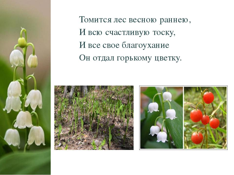 Томится лес весною раннею, И всю счастливую тоску, И все свое благоухание Он...
