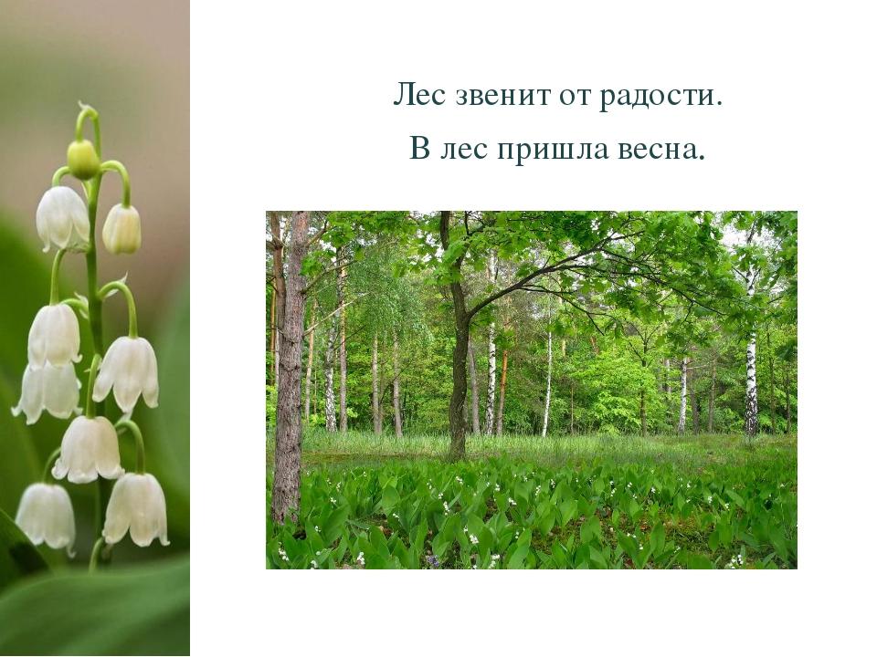 Лес звенит от радости. В лес пришла весна.