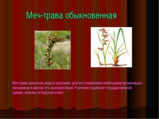 Меч-трава обыкновенная Меч-трава довольно редкое растение, для его сохранения