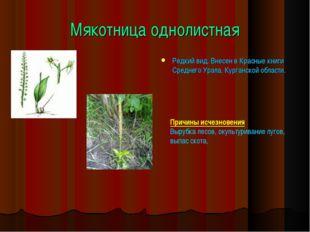 Мякотница однолистная Редкий вид. Внесен в Красные книги Среднего Урала, Кург