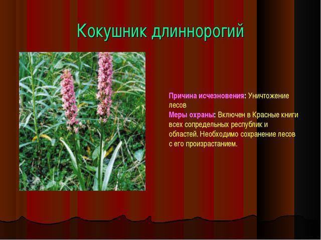 Кокушник длиннорогий Причина исчезновения: Уничтожение лесов Меры охраны: Вкл...