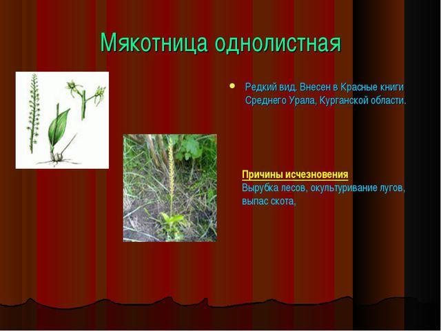 Мякотница однолистная Редкий вид. Внесен в Красные книги Среднего Урала, Кург...
