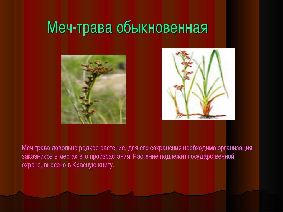 Меч-трава обыкновенная Меч-трава довольно редкое растение, для его сохранения...