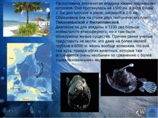 Почему океаническую воду нельзя пить? Почему нельзя искупаться в Северном Лед