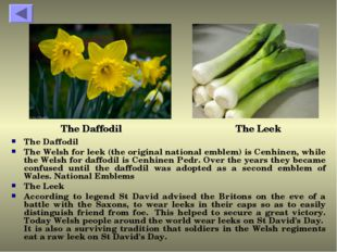 The Daffodil The Welsh for leek (the original national emblem) is Cenhinen, w