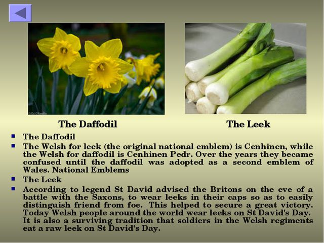 The Daffodil The Welsh for leek (the original national emblem) is Cenhinen, w...