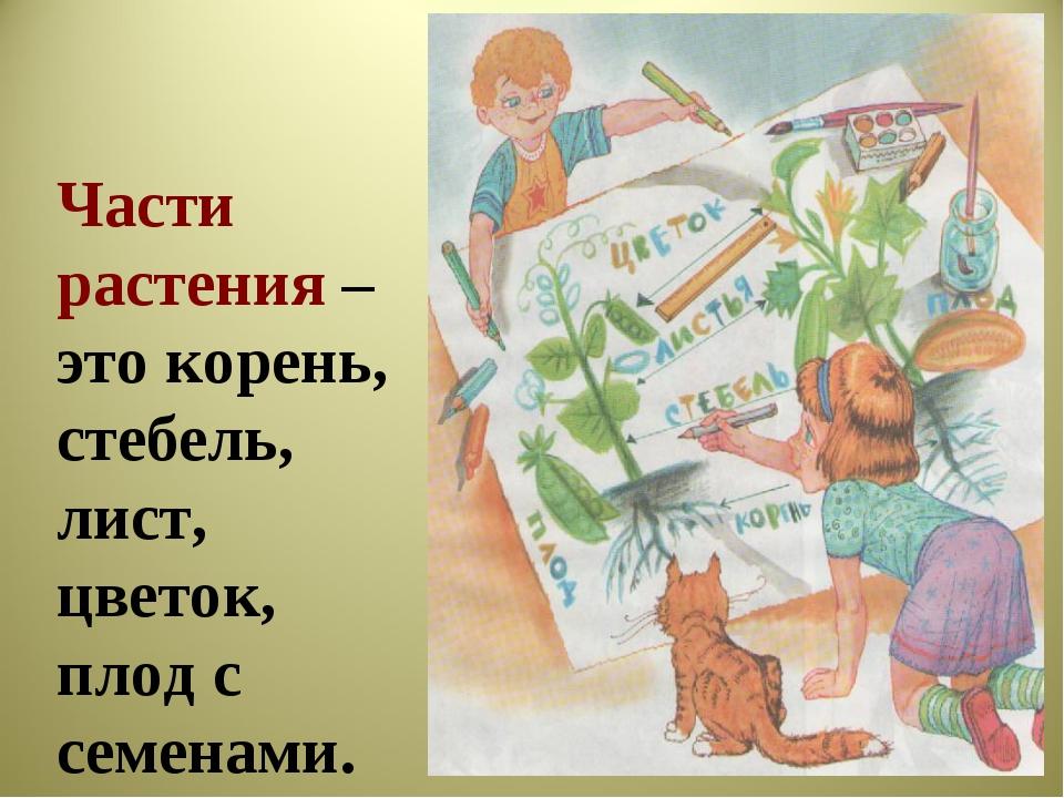 Части растения – это корень, стебель, лист, цветок, плод с семенами.