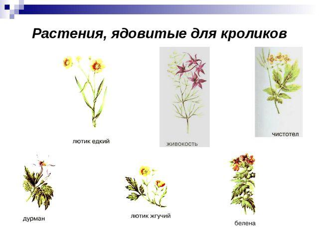 Растения, ядовитые для кроликов