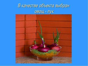 В качестве объекта выбран овощ - лук