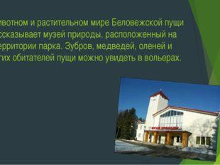 О животном и растительном мире Беловежской пущи рассказывает музей природы, р