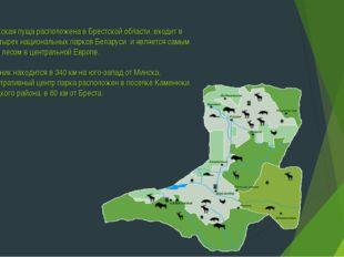 Беловежская пуща расположена в Брестской области, входит в число четырех наци