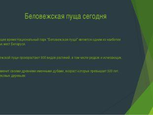 """Беловежская пуща сегодня В настоящее время Национальный парк """"Беловежская пу"""