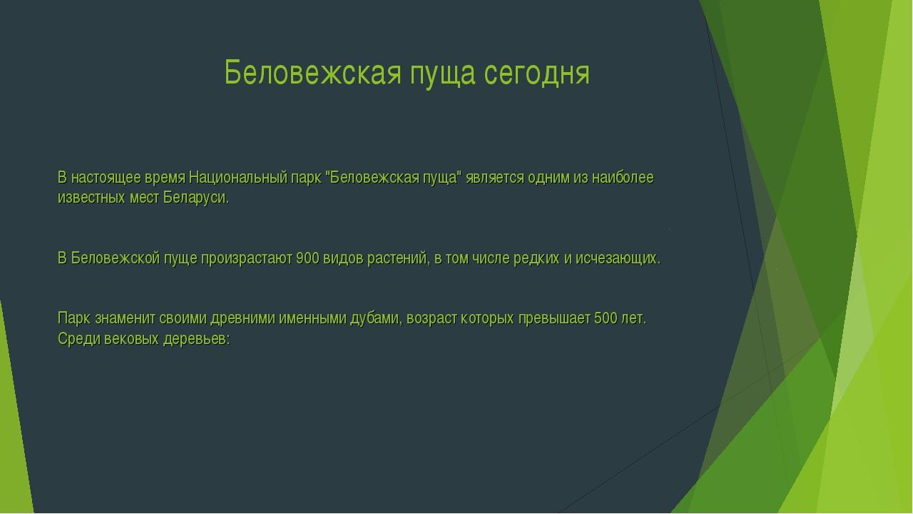"""Беловежская пуща сегодня В настоящее время Национальный парк """"Беловежская пу..."""