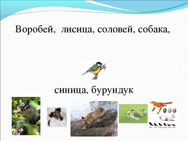 Воробей, лисица, соловей, собака, синица, бурундук