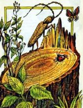 http://book-online.com.ua/images/page_img/1700/b_1700_i_009.jpg