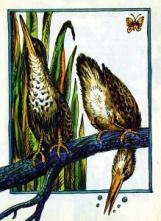 http://book-online.com.ua/images/page_img/1700/b_1700_i_005.jpg