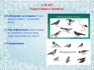 1 ЭТАП Подготовка к проекту: 1.Наблюдение за птицами (Каких птиц не видно? -