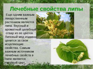 Лечебные свойства липы Еще одним важным лекарственным растением является липа