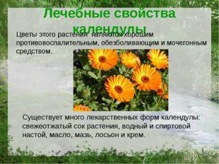 Лечебные свойства календулы Цветы этого растения являются хорошим противовосп