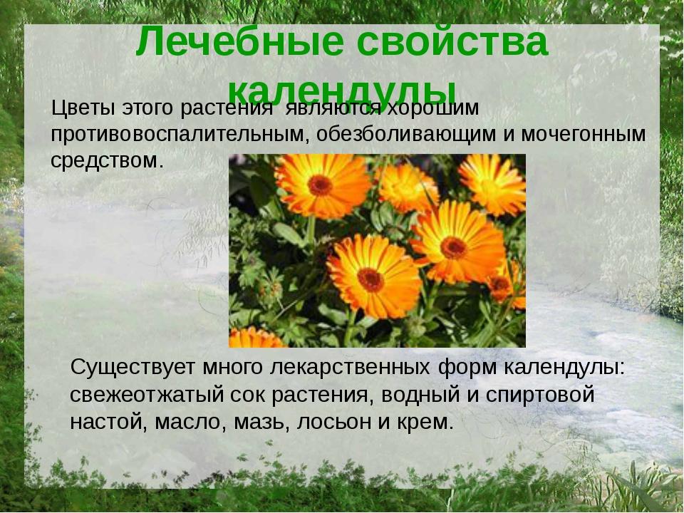 Лечебные свойства календулы Цветы этого растения являются хорошим противовосп...