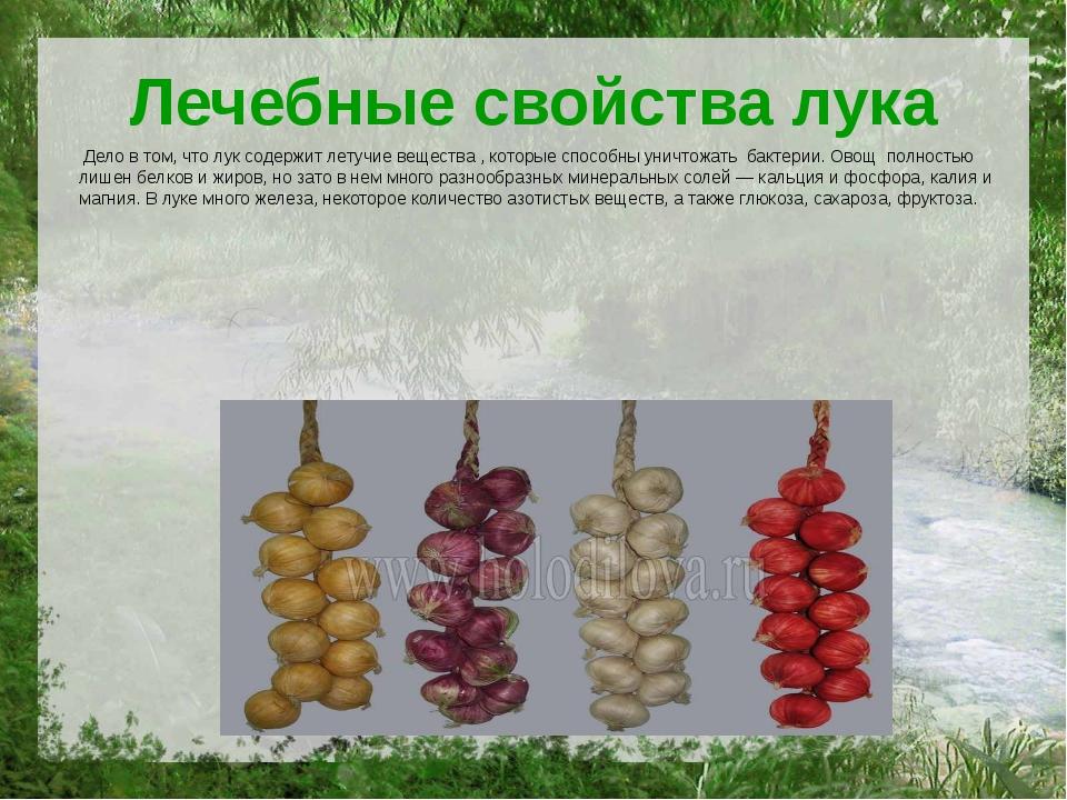 Лечебные свойства лука Дело в том, что лук содержит летучие вещества , которы...