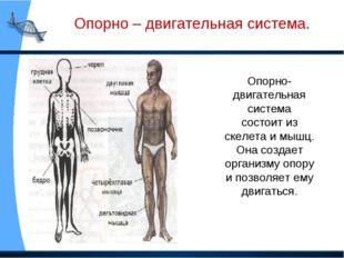 Опорно-двигательная система состоит из скелета и мышц. Она создает организму