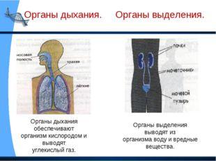 Органы дыхания. Органы выделения. Органы дыхания обеспечивают организм кисло