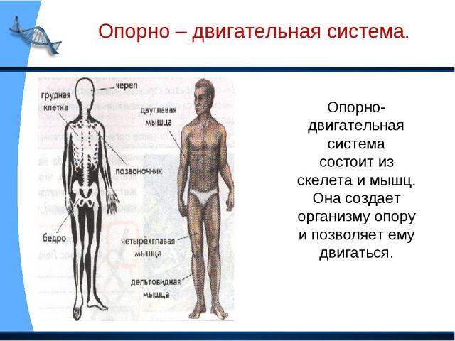 Опорно-двигательная система состоит из скелета и мышц. Она создает организму...