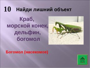 10 Найди лишний объект Краб, морской конек, дельфин, богомол Богомол (насеком