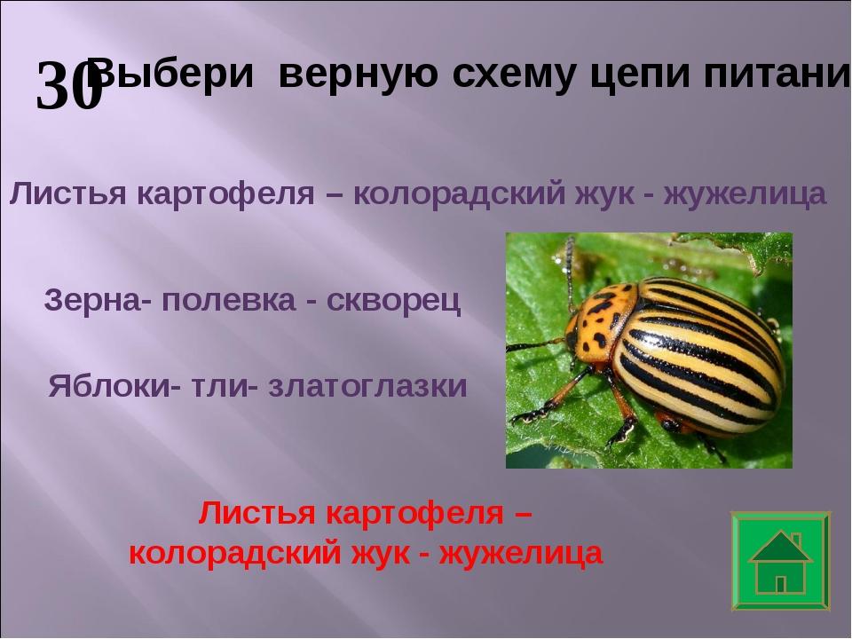 30 Выбери верную схему цепи питания Зерна- полевка - скворец Листья картофеля...