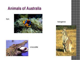 Animals of Australia fish crocodile kangaroo