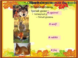 A squirrel A wolf A rabbit A fox Match the pictures to the words