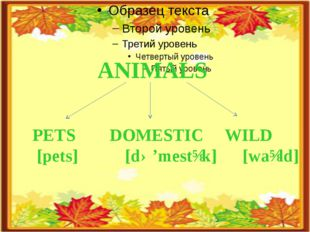 ANIMALS PETS DOMESTIC WILD [pets] [də'mestɪk] [waɪld]