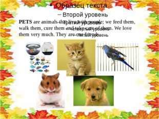 PETS are animals that live with people; we feed them, walk them, cure them a