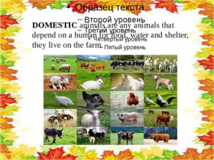 DOMESTIC animals are any animals that depend on a human for food, water and