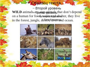 WILD animals are any animals that don't depend on a human for food, water an